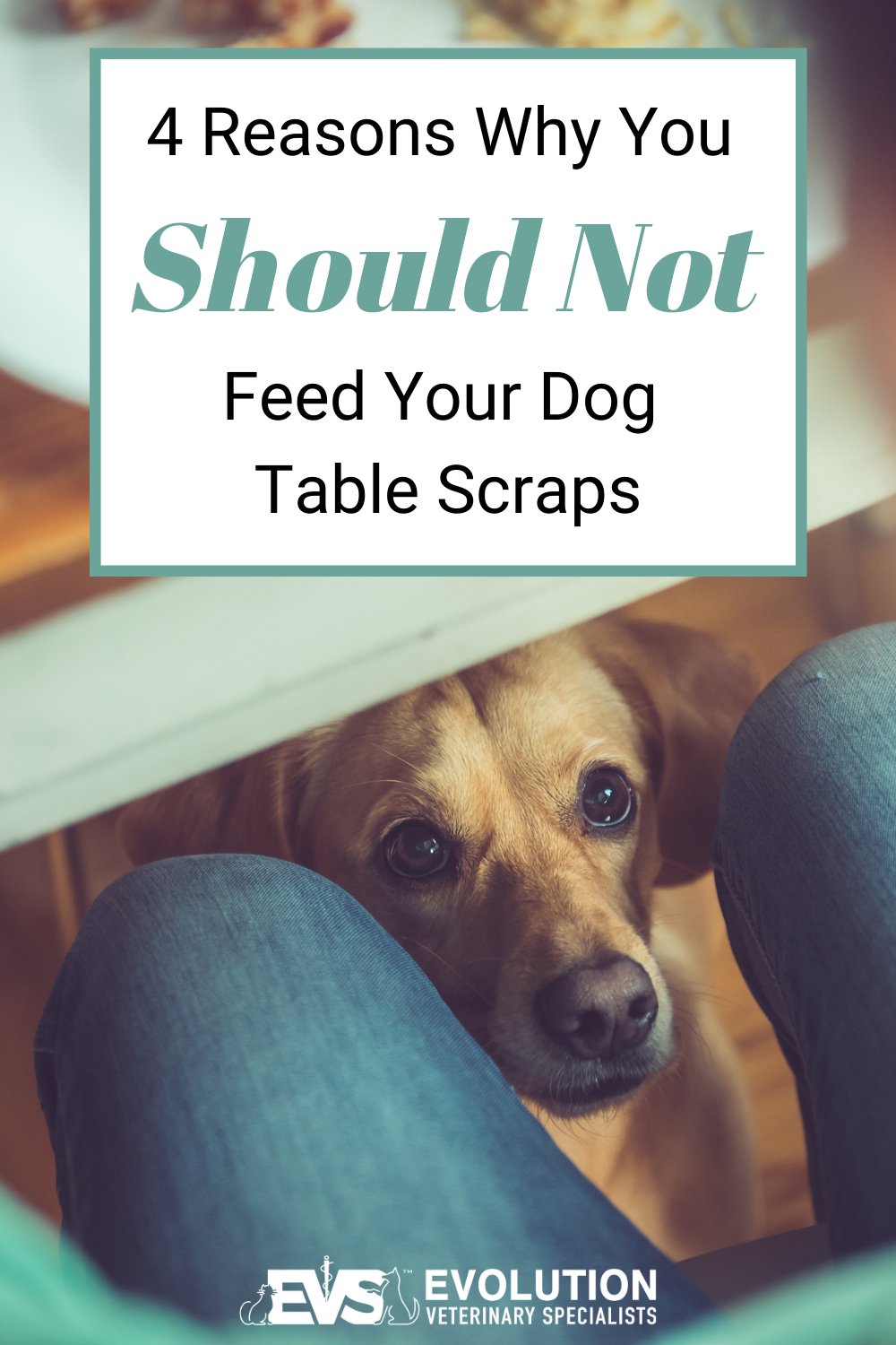 4 reasons why you should not feed your dog table scraps