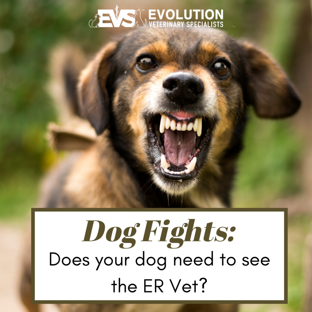 Dog fights: Do you need to bring your dog to the ER?