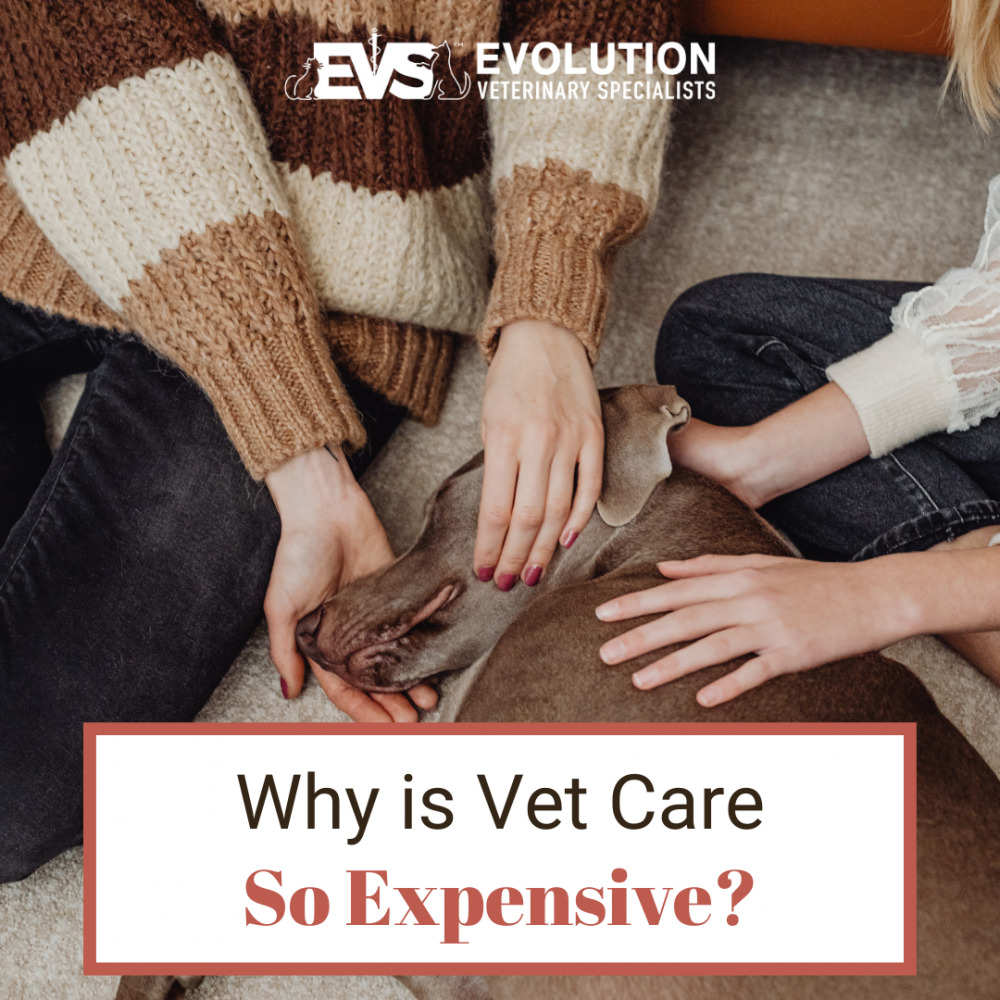 Why is Vet Care so Expensive?