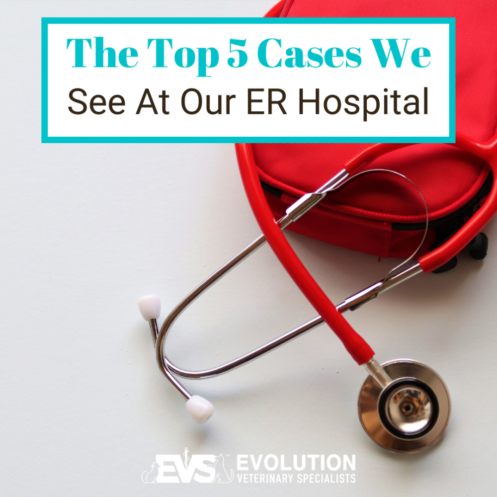 The Top 5 Cases We See At Our ER Vet