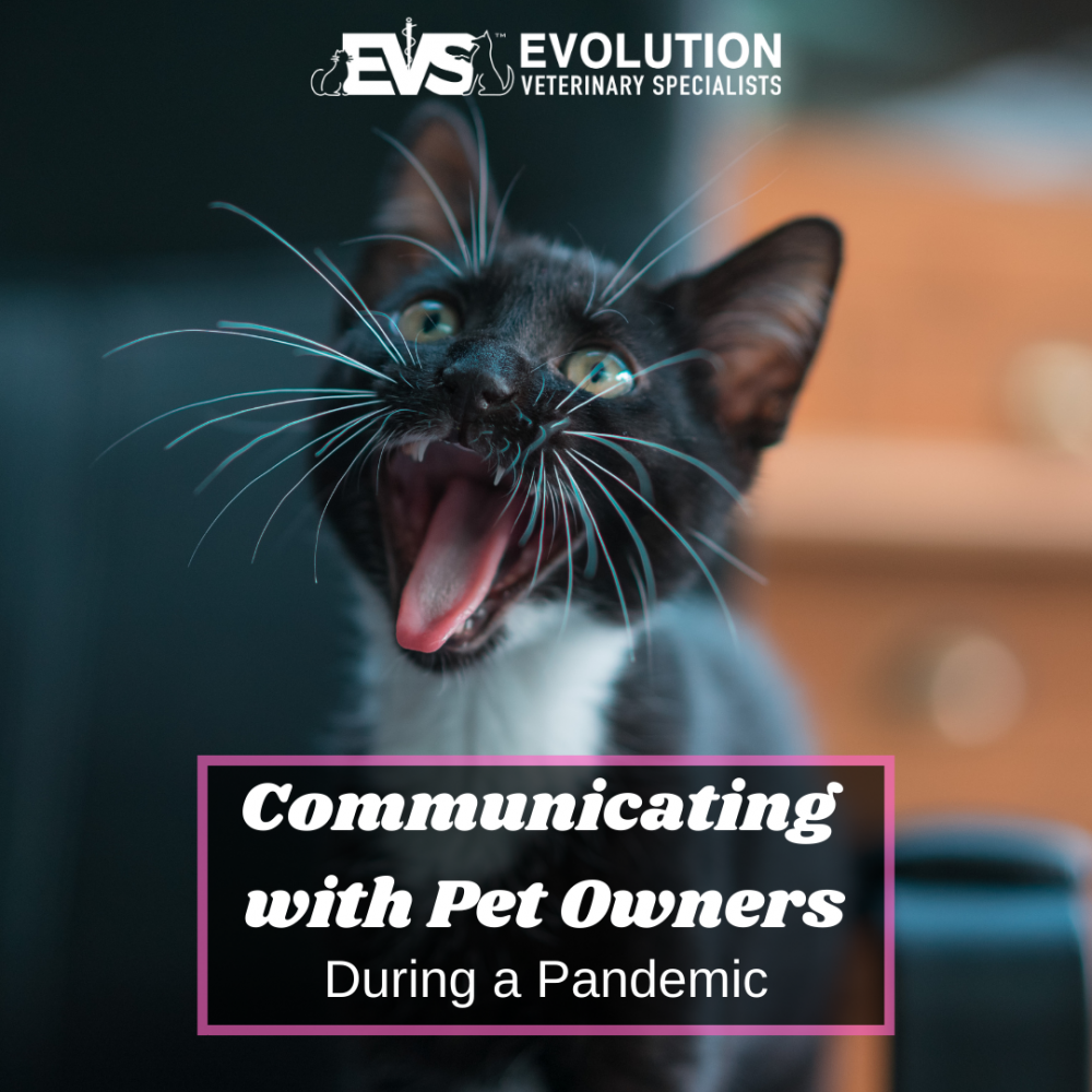 Communicating with pet owners during a pandemic