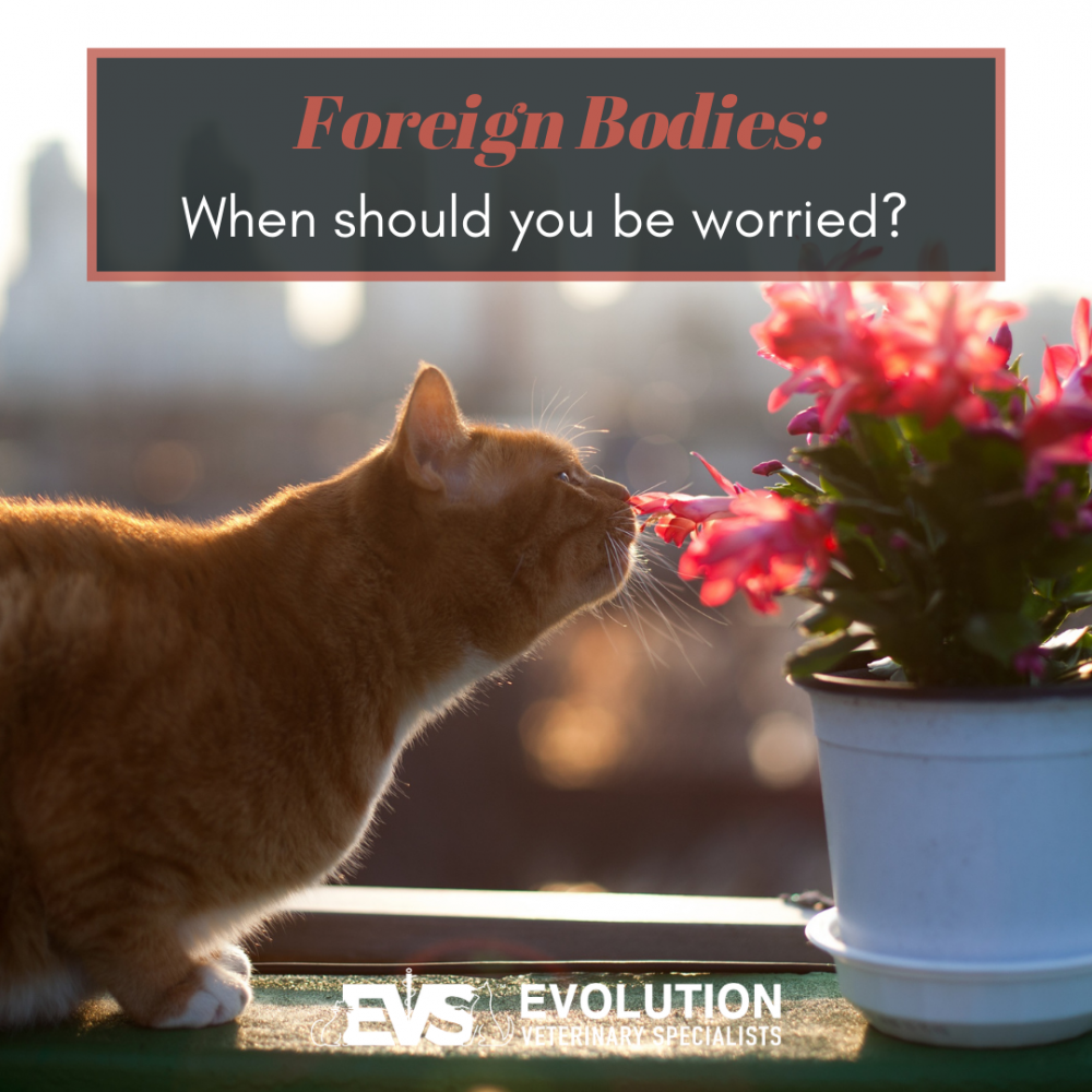 Foreign bodies: When should you be worried?