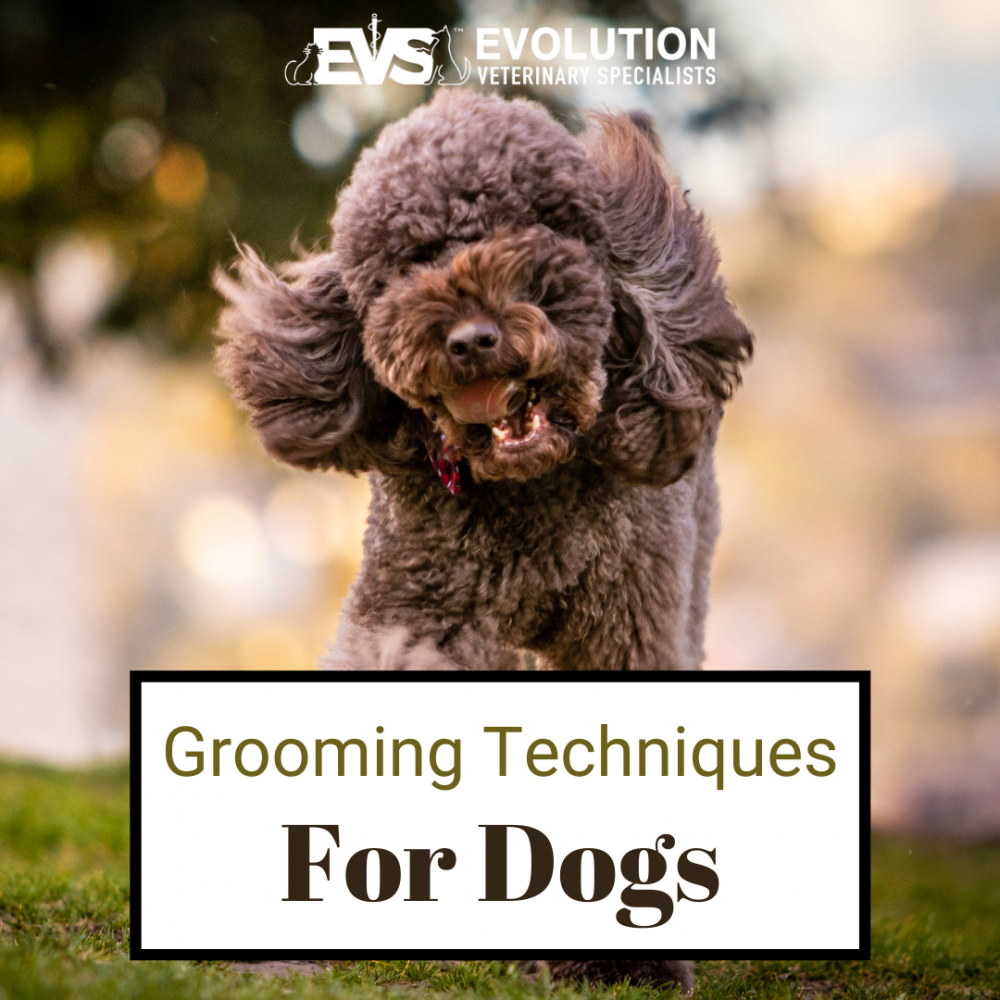 Grooming Techniques for Dogs