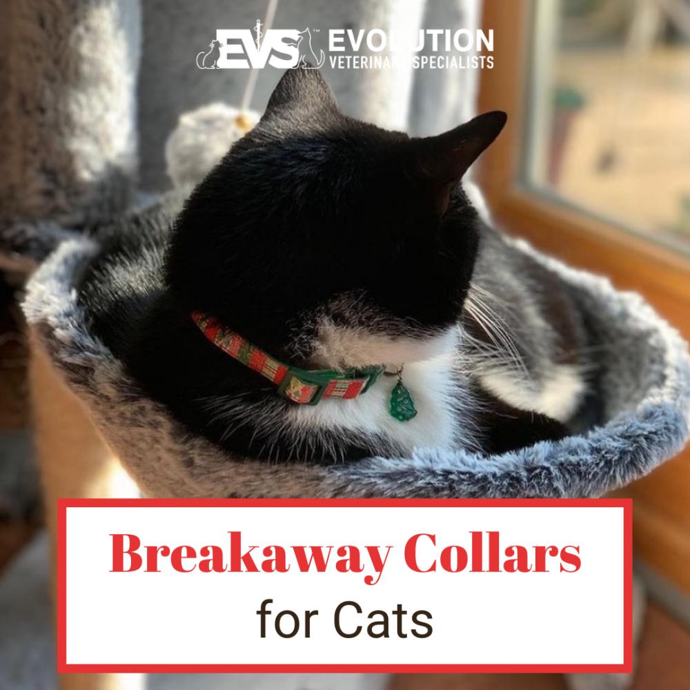 breakaway collars for cats